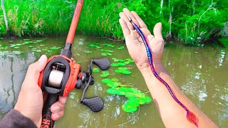Fishing BIG Worms for GIANT Bass (Bank Fishing)