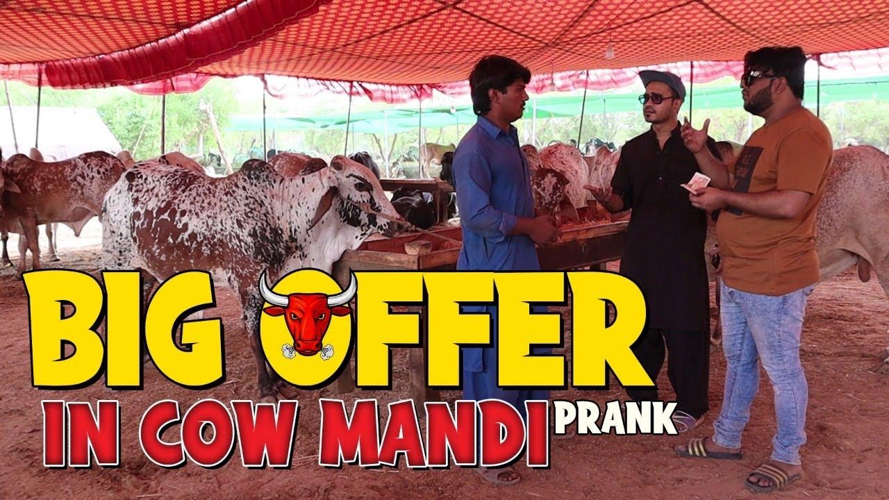   Big Offer In Cow Mandi   By Nadir Ali & Ahmed Khan in   P4 Pakao   2021