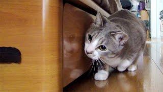 だるまさんが転んにゃ2 - Stalking Cat 2 -
