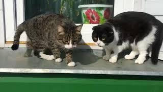 funny cat. lifecats.