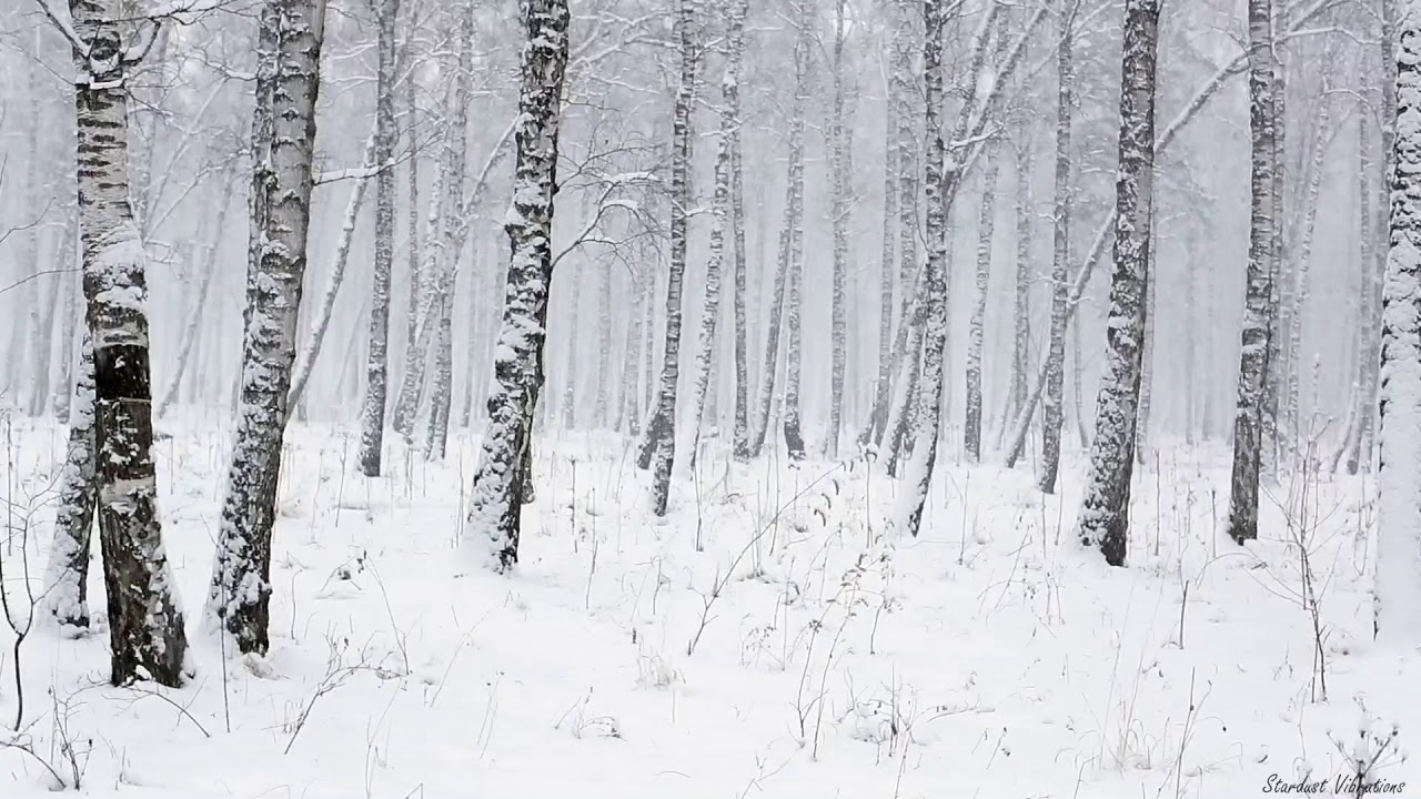 Winter In Black And White >> Snowstorm In The Forest Winter Blizzard Sounds For Sleep
