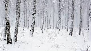 Snowstorm in the Forest Winter Blizzard Sounds for Sleep & Relaxation Natural White N ...