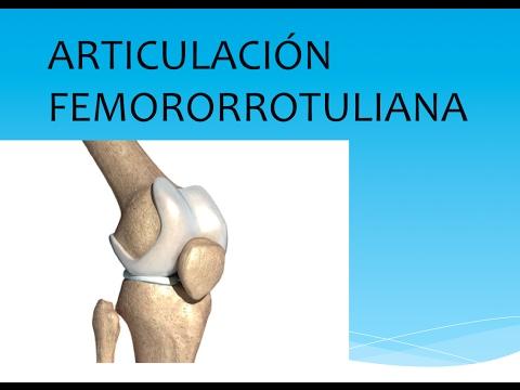 La rótula y la articulación femororrotuliana - YouTube