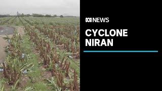 Tropical Cyclone Niran flattens Far North Queensland banana farms | ABC News