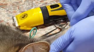 Внутривенное введение иглы кошке