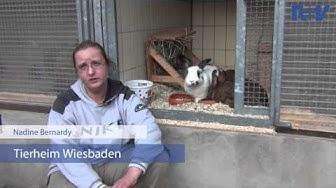 #verschenkZeit - Tierheim Wiesbaden