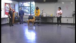 Volunteers Train Shelter Dogs For Adoption