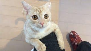 一人ぼっちになってしまった猫、寂しくて鳴き続ける thumbnail