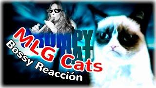 MLG CATS | GATITOS PROFESIONALES  XDD | Bossy Reacción | Lady Boss