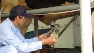 Repeat youtube video MVI 0801Electro Ejaculation. Hokkaido Animal Farm, Japan