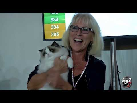 FIFe World Cat Show 2017 - Nominations Category 1