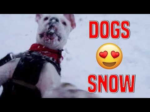 Dogs Discovering Snow