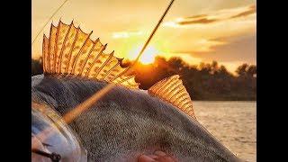 Уловистый воблер GO-TO, ОДНА рыбалка - ОДИН воблер, ловля судака на воблер GERMAN. река Ахтуба
