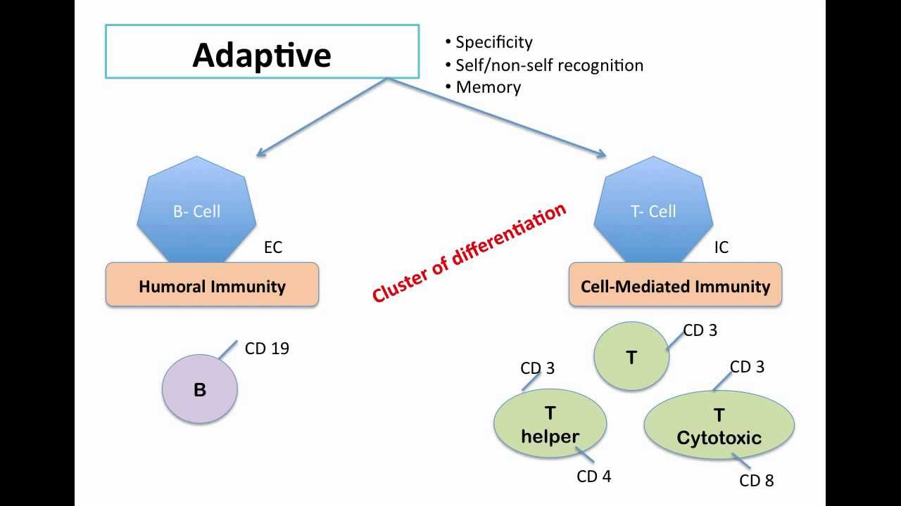 biol2300 adaptive immunity Full text of boston college bulletin [electronic resource] see other formats.