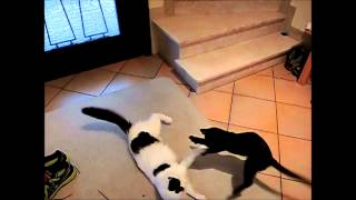 Dubstep Kitten