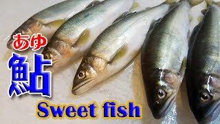 鮎のさばき方(ayu fish,sweet fish)鮎料理付き【鮎の塩焼】【鮎の刺身】【鮎の椀物】