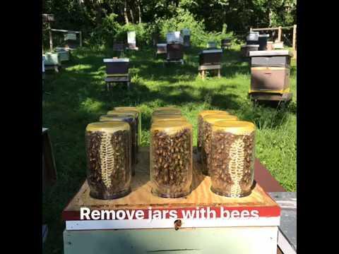 Mason jar beehive Honeybees in a mason jar  YouTube