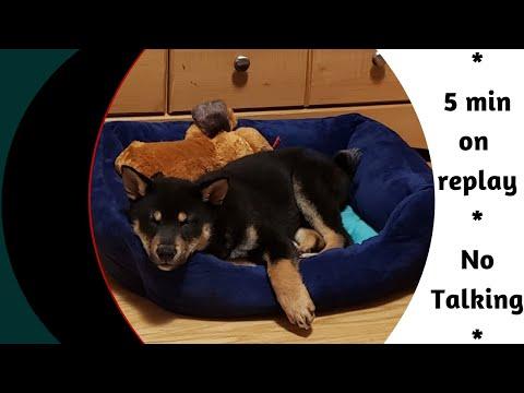 dog-asmr-(toy)-heartbeat|-surprisingly-relaxing-sleep
