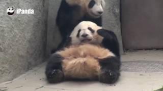Обнимашки панд смотреть онлайн видео от Котик Котикович в хорошем качестве