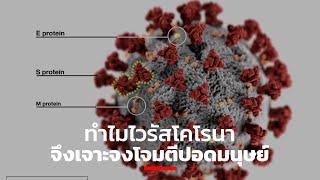 ทำไมไวรัสโคโรนาจึงเจาะจงโจมตีปอดมนุษย์