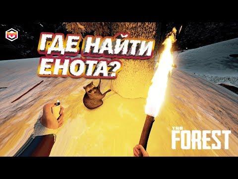 the forest Где найти енота?