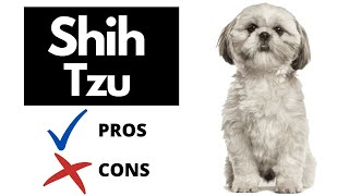 Shih Tzu Pros And Cons   The Good AND The Bad!!