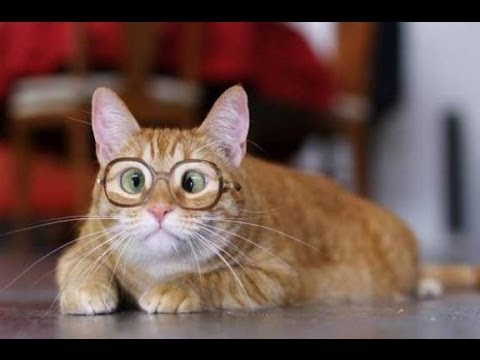 Funny Cats Compilation [Most See] Funny Cat Videos Ever ... Funny Videos Cats
