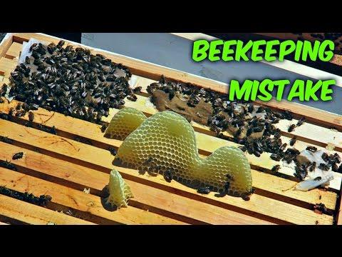 Bad Beekeeping Mistake