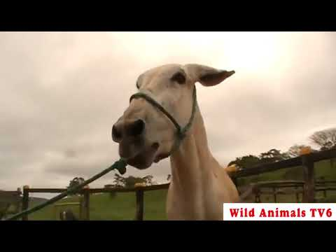 Download Donkey Mating, Animals Mating, New Compilation