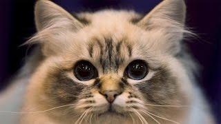 Самые смешные COUB приколы про кошек и котят [#2]