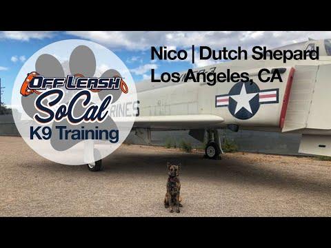 Nico | Dutch Shepherd | Venice, CA