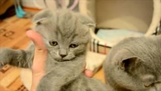 Дневник котят #2 | День 20 - Прощаемся с котятами
