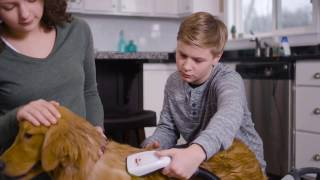 How to use BARKBATH™ Portable Dog Bath (version 2) | BISSELL