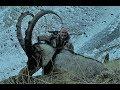 turgay sulu kayseri teke avı extreme anatolian bezoar ibex hunt long distance