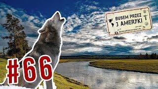 #66 Jak WILKI w Yellowstone zmieniły BIEG RZEK?