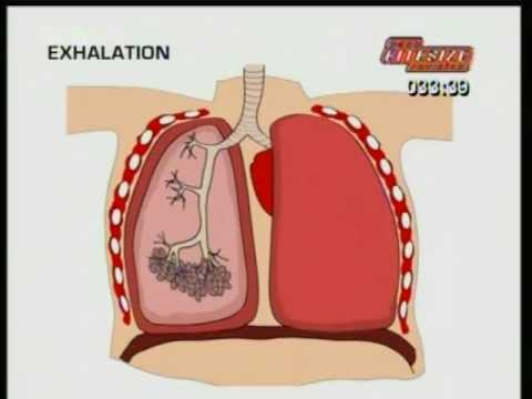 GCSE BBC Science Bitesize - Breathing - YouTube
