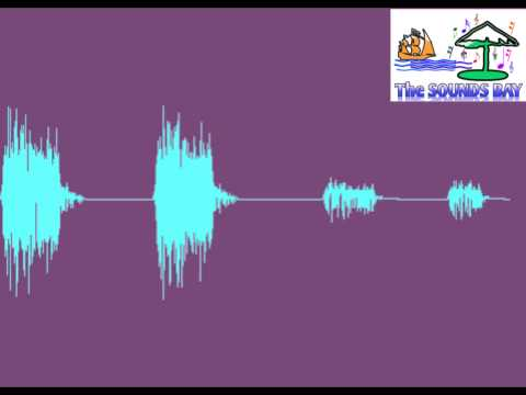 Crow Call - Bird Sounds - Soundsbay.blogspot