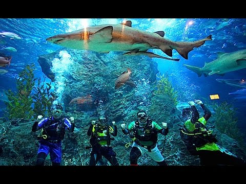 Siam Ocean World Bangkok, Bangkok Oceanarium, Bangkok Aquarium, video review