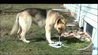A Grande Ideia - Bebedouro para cachorro faz sucesso nos EUA