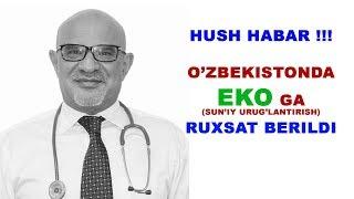 #104 DOKTOR D: HUSH HABAR EKO ga RUHSAT BERILDI. EKO va BEPUSHTLIK HAQIDA TUSHUNCHA 1-QISM