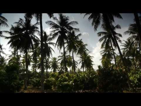 Farmland near Ramasingavaram India