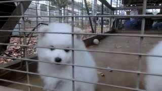 撮影日2014年11月30日 アライ畜犬牧場 http://www.araichikuken.com.