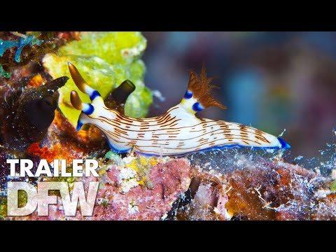 Wonders of the Sea 3D trailer | 21 december in de bioscoop