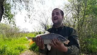Рыбалка на Днестре бешенный клев КАРАСЯ Бюджетный вариант ловли КАРПА