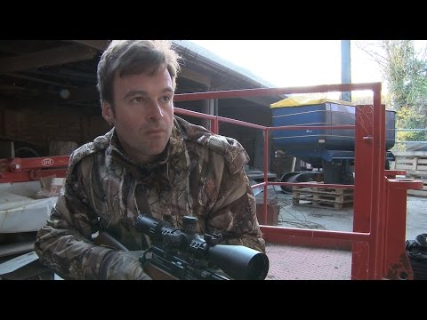 The Airgun Show  daytime ratting and the Air Arms Ultimate Sporter