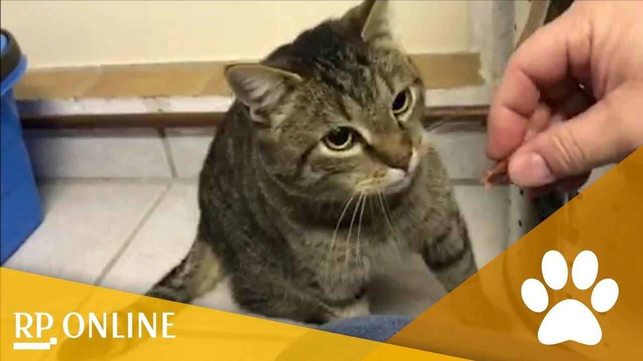 Online-Dating-Seiten für Katzen