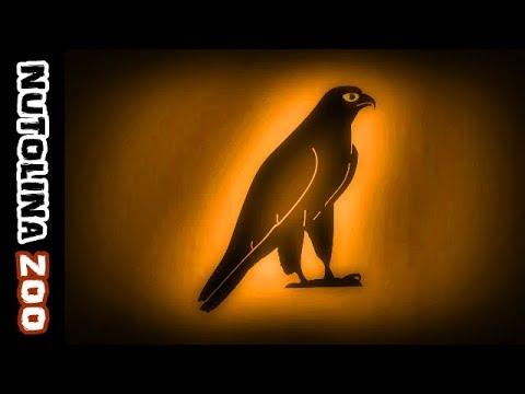 falkenschrei falcon sounds falcon call falcon sound youtube. Black Bedroom Furniture Sets. Home Design Ideas