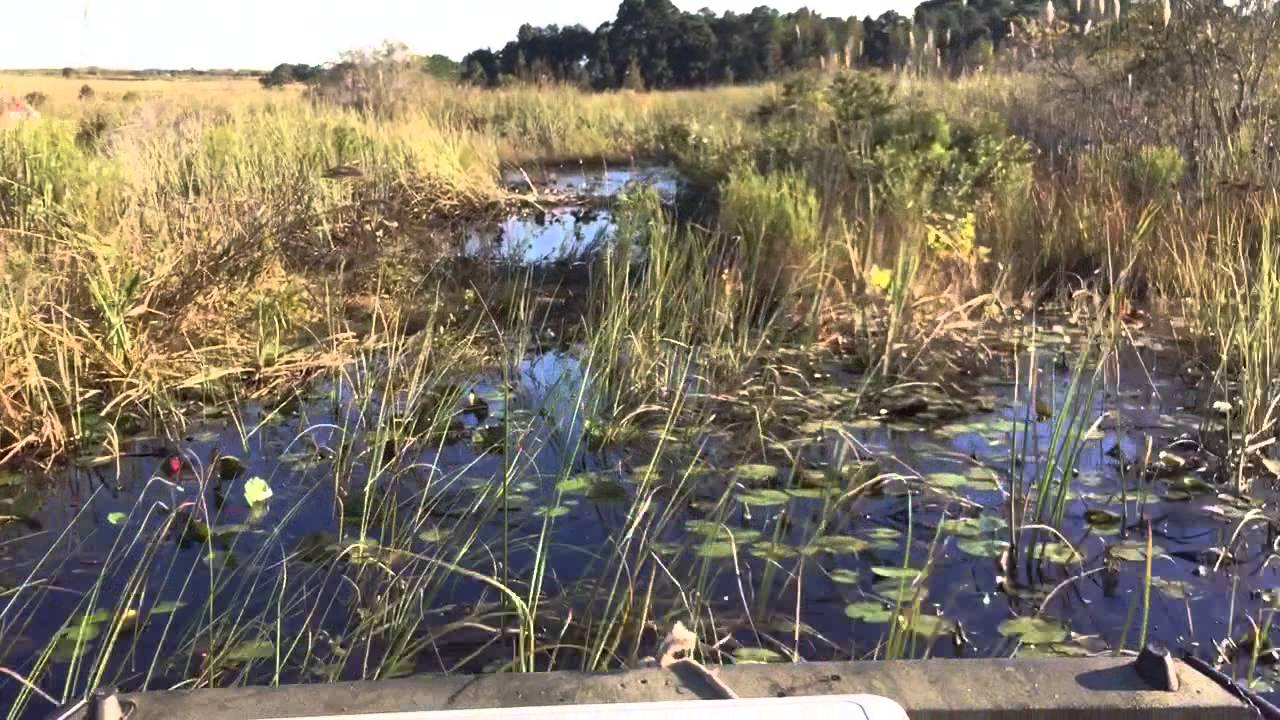 Download Airboat Making Trails AA 10/26/14
