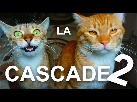 LA CASCADE 2 - PAROLE DE CHAT