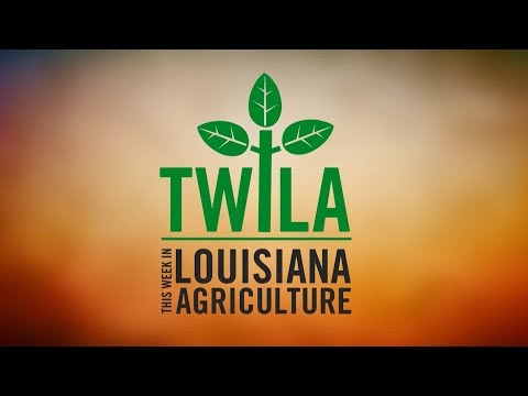 This Week in Louisiana Agriculture